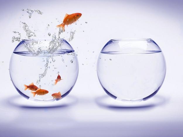 goldfish-water-Exa7m
